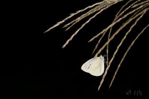 20070924butterfly