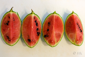 20080823water_melon