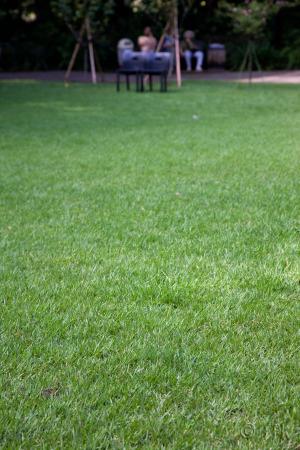 20080901green_grass