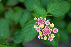 20081001flower
