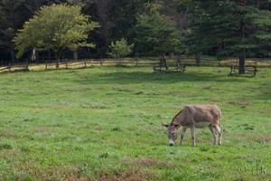 20081013donkey